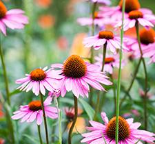 Garten Step-by-Step