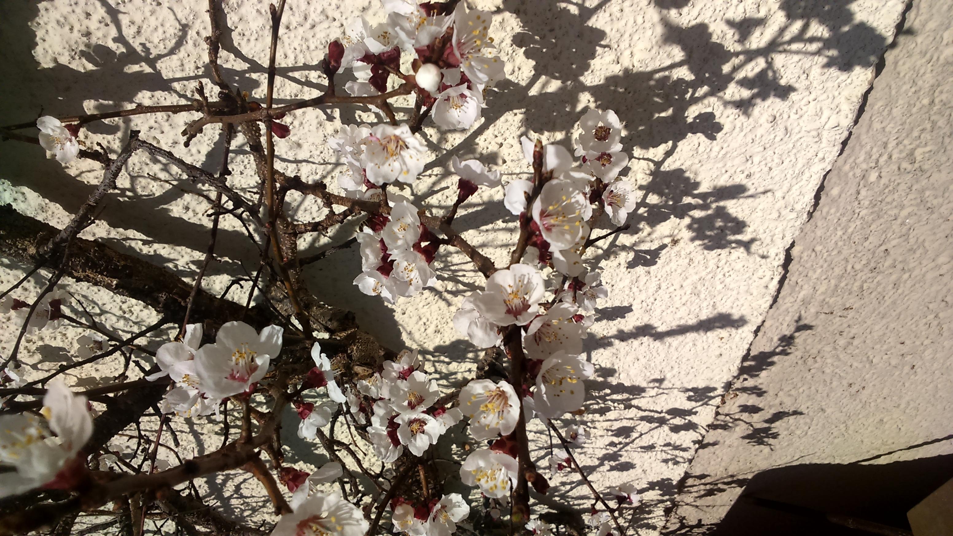 Frühlingsgefühle Wecken - Gu Gartenarbeit Fruhling Fruhlingsbeginn Tipps