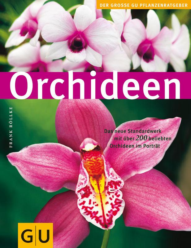 Orchideen. Zoom