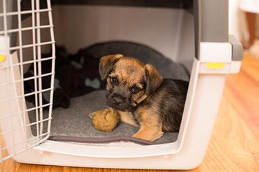 Welpe in seiner Hundebox