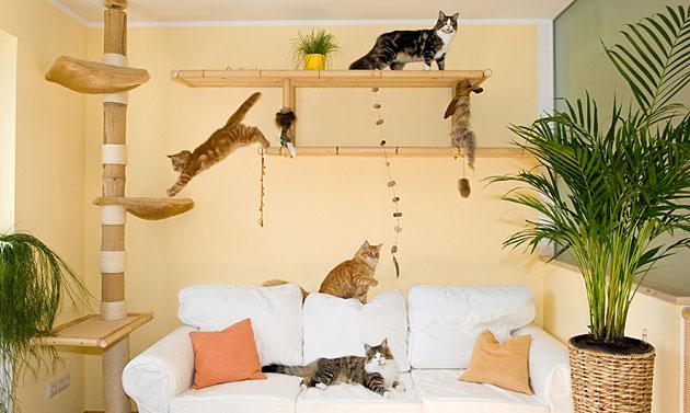 Das katzenparadies in der wohnung gu for Einrichten einer wohnung