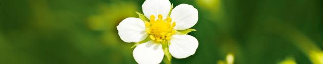 Garten und Natur Tipps und Downloads vom GU Verlag