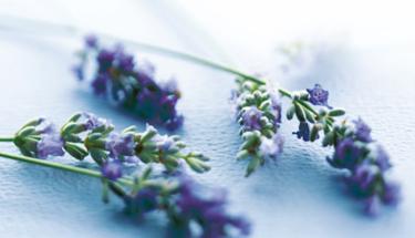 Hilfreiche Pflanzen bei Angststörungen