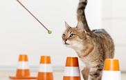 3.) Auch zwischendurch wird immer wieder geclickt, solange die Katze noch unsicher ist.
