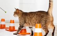 5.) Legt Ihre Katze den Hinweg konzentriert und flüssig zurück, nehmen Sie den Rückweg dazu.
