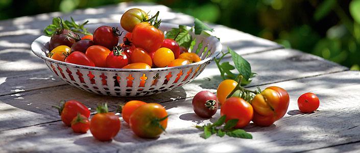 tomaten anbauen und genie en gu. Black Bedroom Furniture Sets. Home Design Ideas
