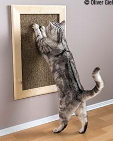 Kratzbrett für Ihren Stubentiger - GU Katzen Basics