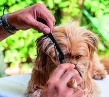 Masih Samin Sei höflich zu deinem Hund