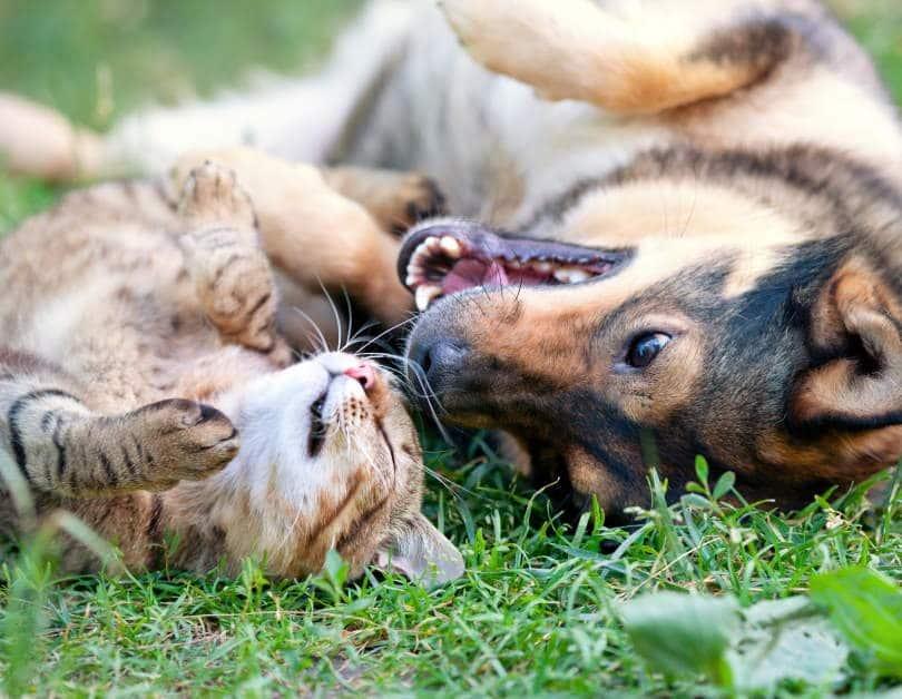 Katze und Hund liegen auf dem Rücken