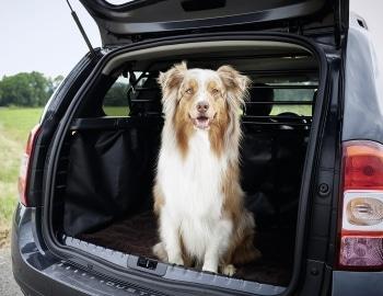 Hund steigt aus Auto aus