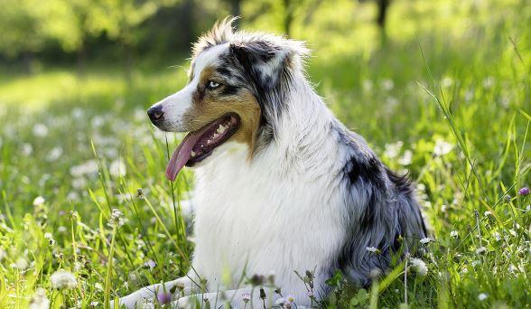 Entspannter Hund[