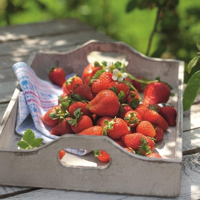 Erdbeeren auf Tablett