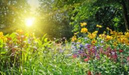 Garten mit Sonnenuntergang