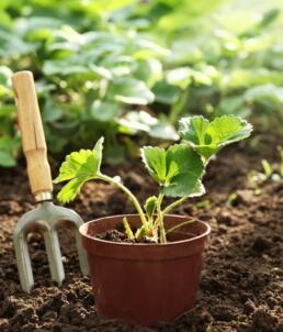 Gartenvorbereitung