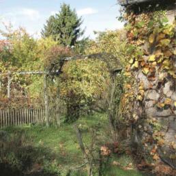 Verwildeter Garten