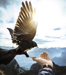 Vogel auf der Hand