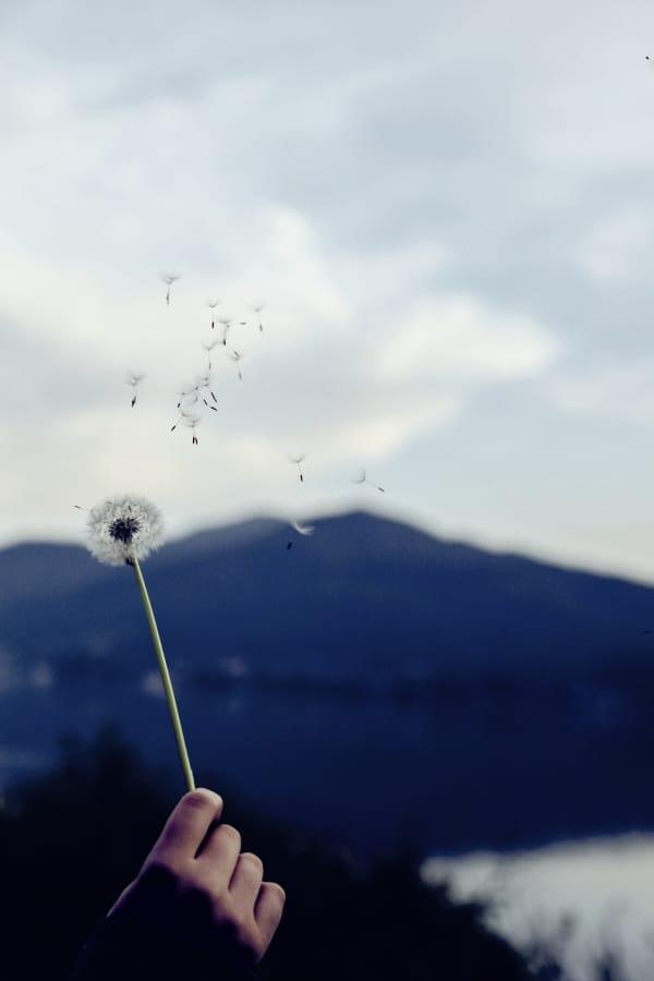 Frau hält Pusteblume in der Hand