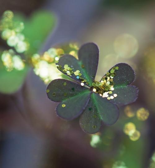 Glitter clover - St. Patricks Day