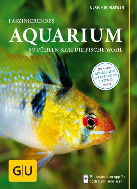 Faszinierendes Aquarium