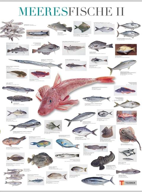 Meeresfische II