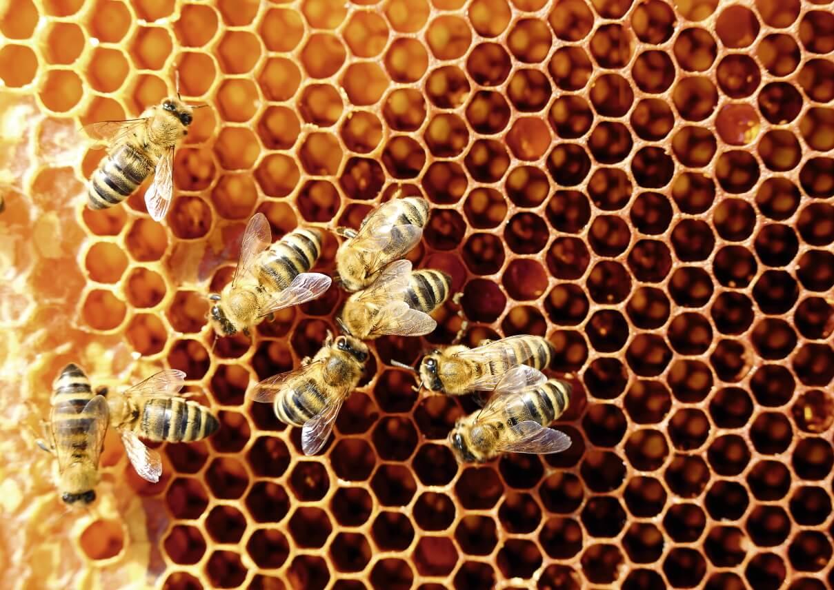 Bienen Waben