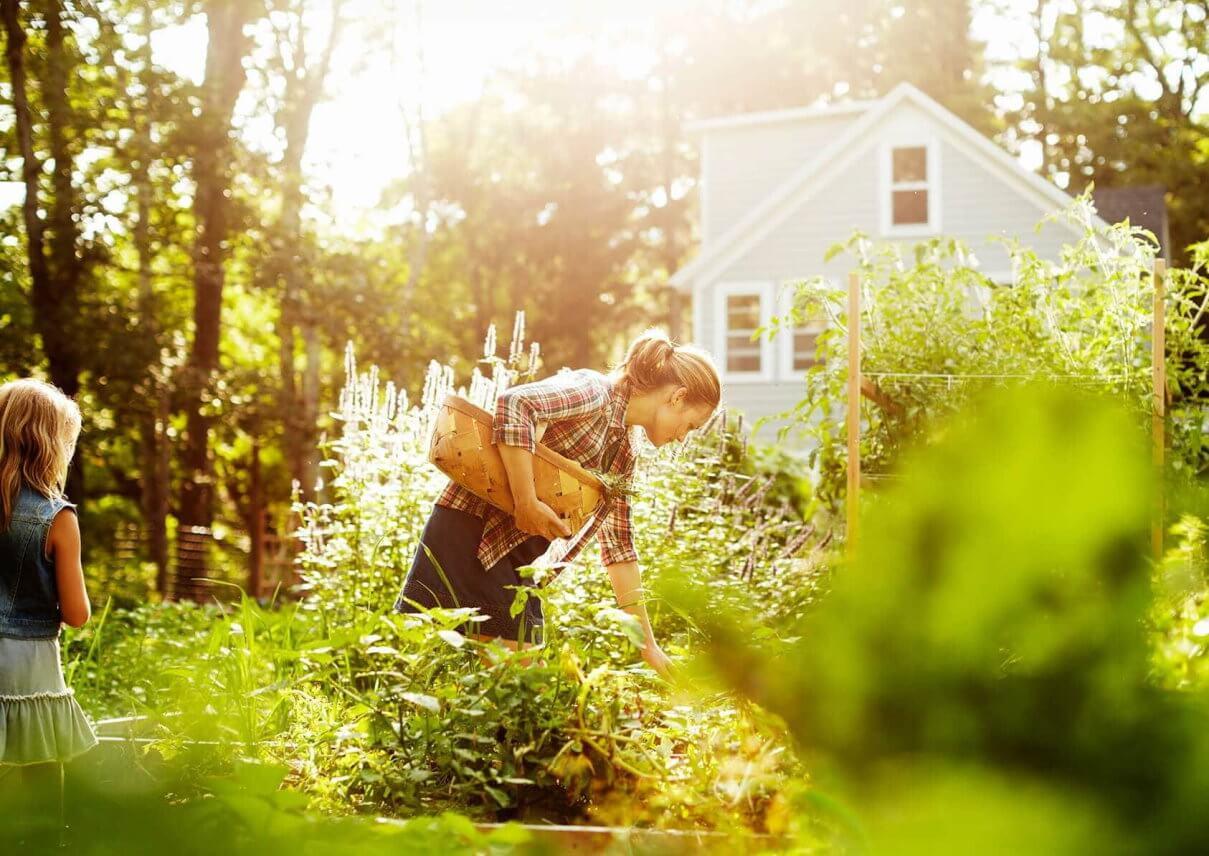 Frau pflückt Blumen im Garten